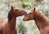 Amore Di Mustang