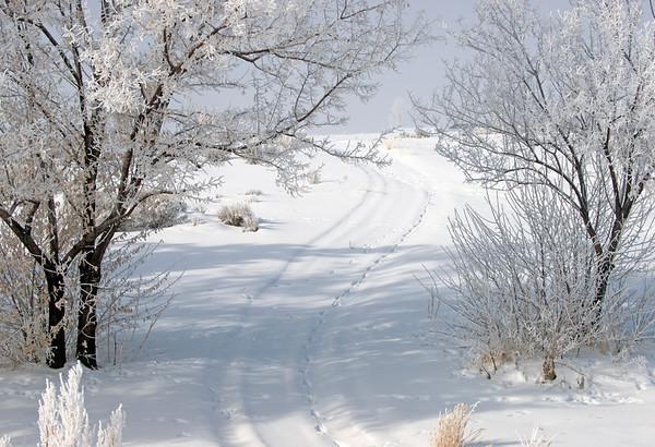 Pogonip Trail