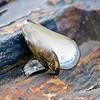 Mussel Shell on beach
