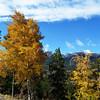 Fall Colors Near Breckenridge CO