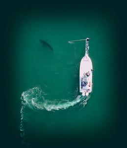 Shark Tagging Nauset beach