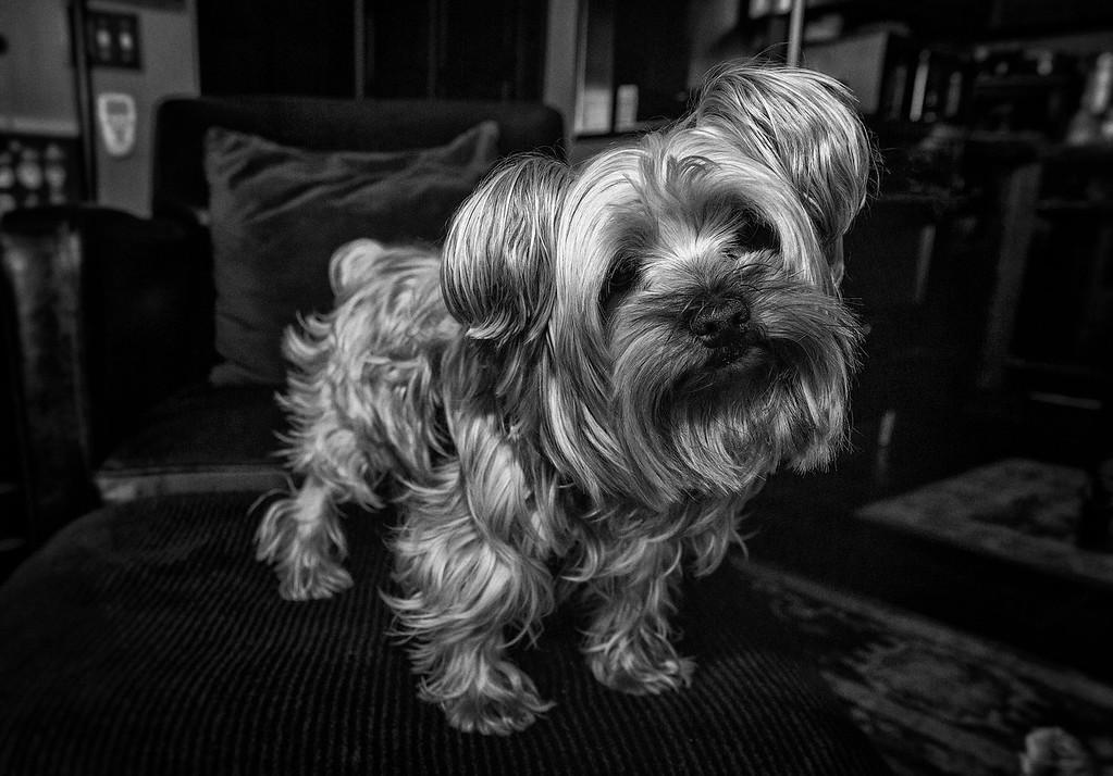 dogzz