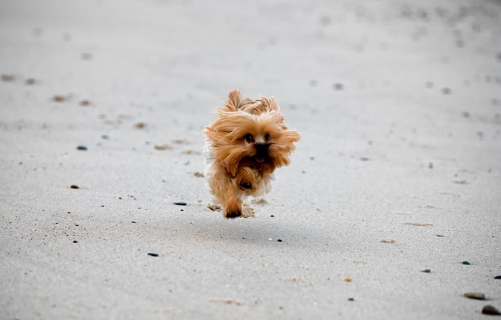 Lulu running