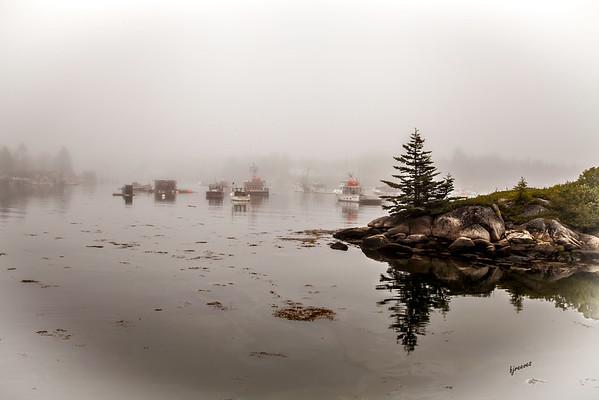 Foggy Harbor in Maine