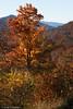 Kangamangus Highway Colors - New Hampshire, USA