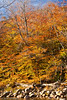 Kangamangus Highway Colors IV - New Hampshire, USA
