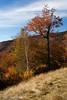 Kangamangus Highway Colors II - New Hampshire, USA