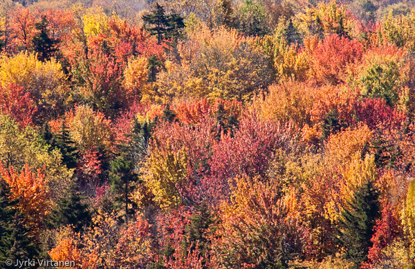 New England Foliage II - New Hampshire, USA