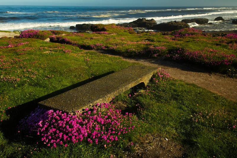 Sea pink flowers, also known as thrift, decorate the beach at Yachats, Oregon.<br /> © Cindy Clark