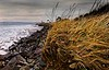 January walk on the beach at Ft. Worden, Port Townsend, WA.<br /> © Cindy Clark