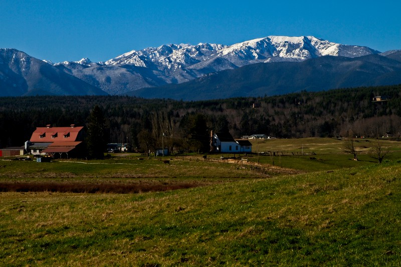 Pastoral scene beneath the Olympic mountains in Washington.<br /> ©Carl Clark