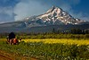 Lots of lush farm land near Mt. Hood, Oregon.<br /> © Cindy Clark