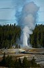 While waiting for Old Faithful to put on her show, Castle Geyser put on a show of its own!<br /> Photo © Cindy Clark