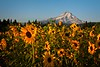 Another sunrise at Mountain View Orchards near Hood River, Oregon.<br /> © Cindy Clark