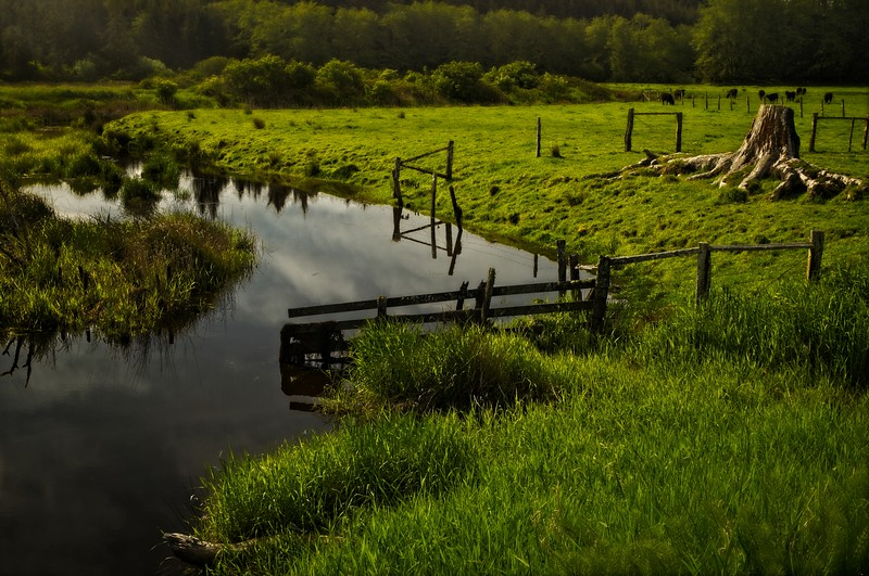 A lovely pasture along highway 101 near South Bend, Washington.<br /> © Cindy Clark