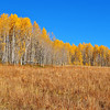 Aspen Grove in Colorado 7
