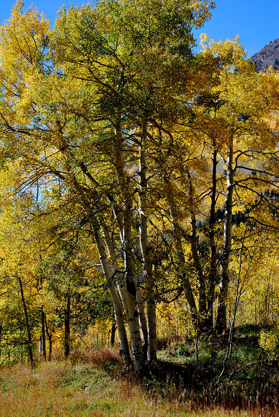 Fall Foilage in Colorado 13