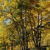 Fall Foilage in Colorado 13