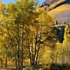 Fall Foilage in Colorado 12