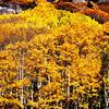 Aspen in Colorado 2