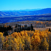 Aspen Trees near Glenwood Springs Colorado