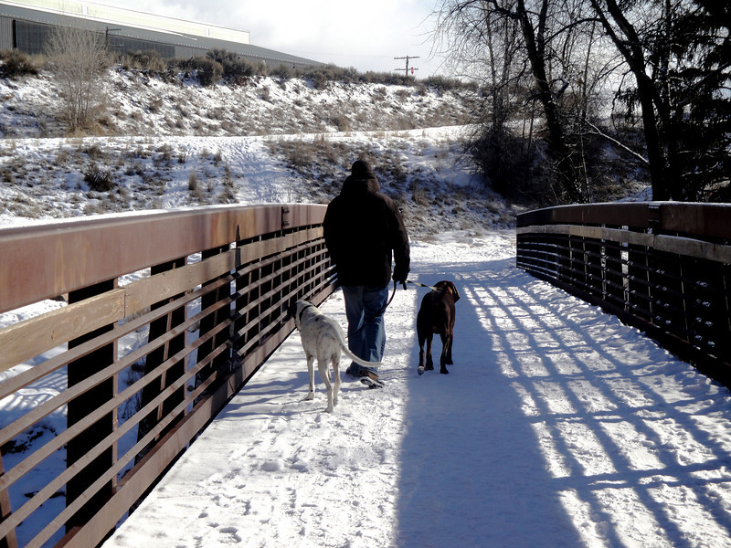 Out for a Walk on a snowy day in Colorado