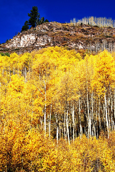 Aspens 2 in Colorado