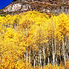 Aspens 2 in Colorado