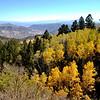Aspen Grove in Colorado 6