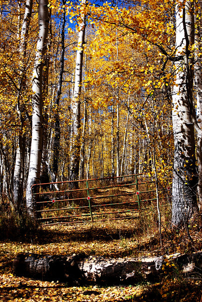 End of the Road in Aspen Grove in Colorado