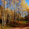 Near Aspen Colorado