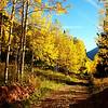 Aspen in Colorado 3