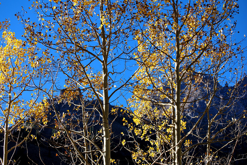 Maroon Bells 14 near Aspen Colorado