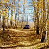 Driving through Aspen trees in Colorado