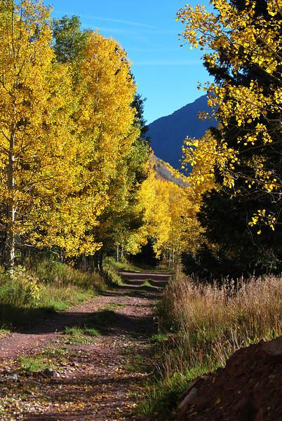 Fall Foilage in Colorado 10