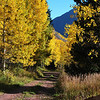 Fall Foilage in Colorado 10