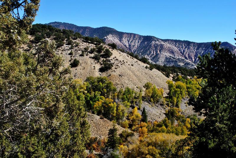 Fall Foilage in Colorado 6