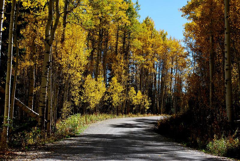 Fall Foilage in Colorado 11