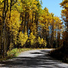 Fall Foilage in Colorado 11