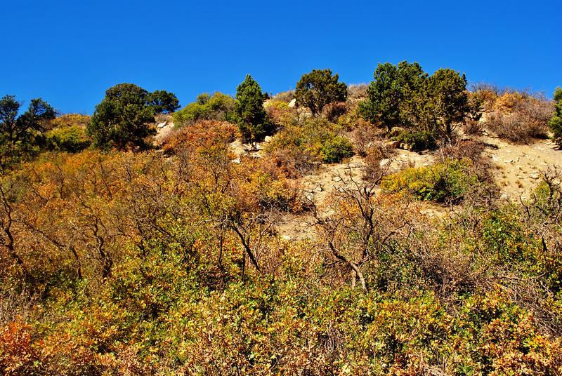 Fall Foilage in Colorado 2