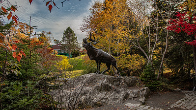 Fall at the Caribou at Bowring Park