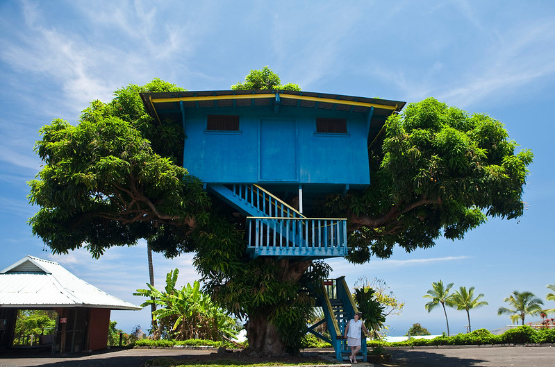 Mango Tree house