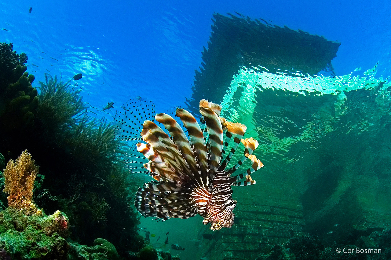 A lion fish in front of a pier in Indonesia.