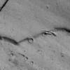Lunar Landscape or Peeling Paint