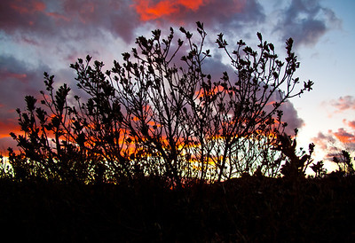 FIREY SKYS IN MESILLA VALLEY II