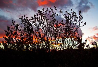 FIREY SKYS IN MESILLA VALLEY II