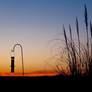 LONE FEEDER AT SUNSET