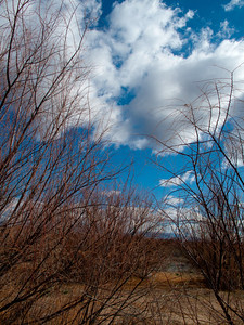 INTERPLAY OF SKY & BRANCHES