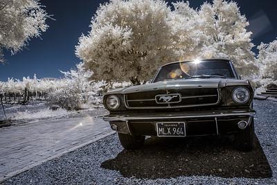 Summer of '64