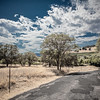 Backroad Vineyard